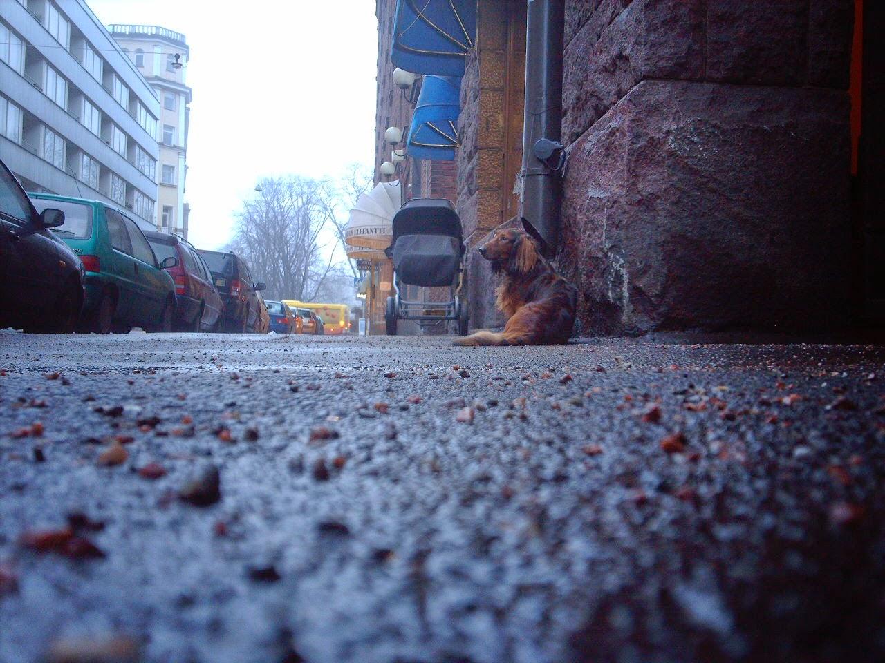 5 denerwujących zachowań psiarzy