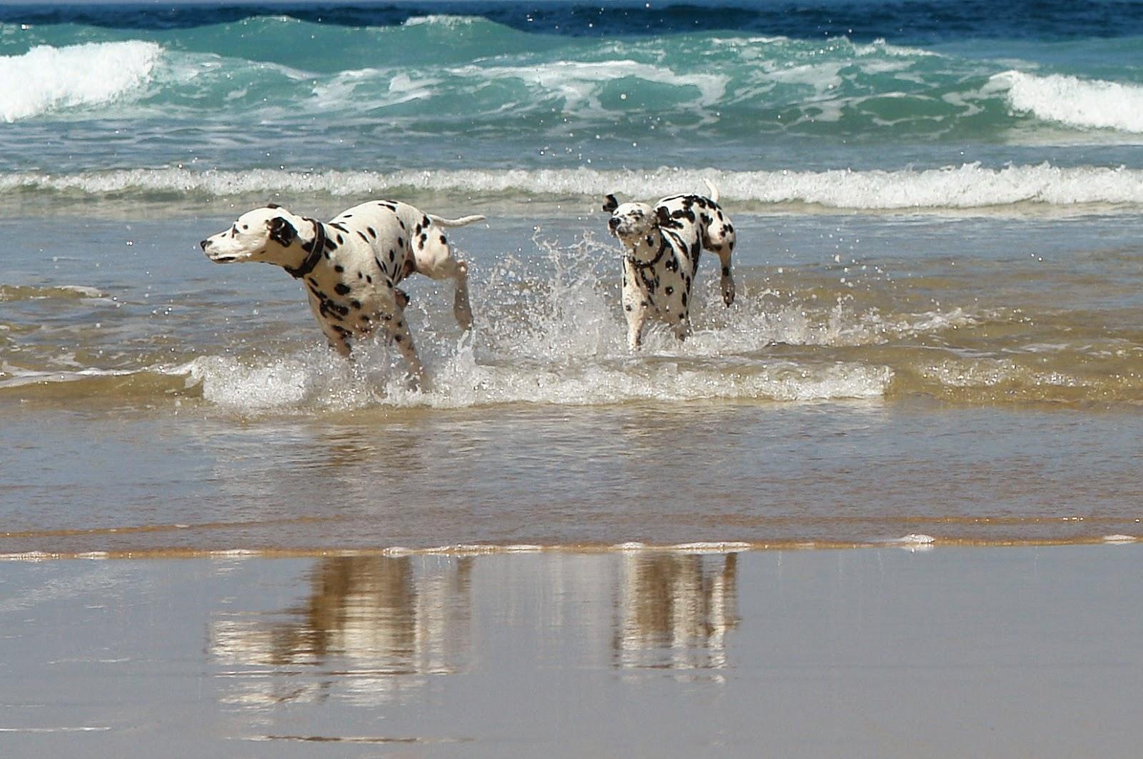 Wakacje: z psem, czy bez?