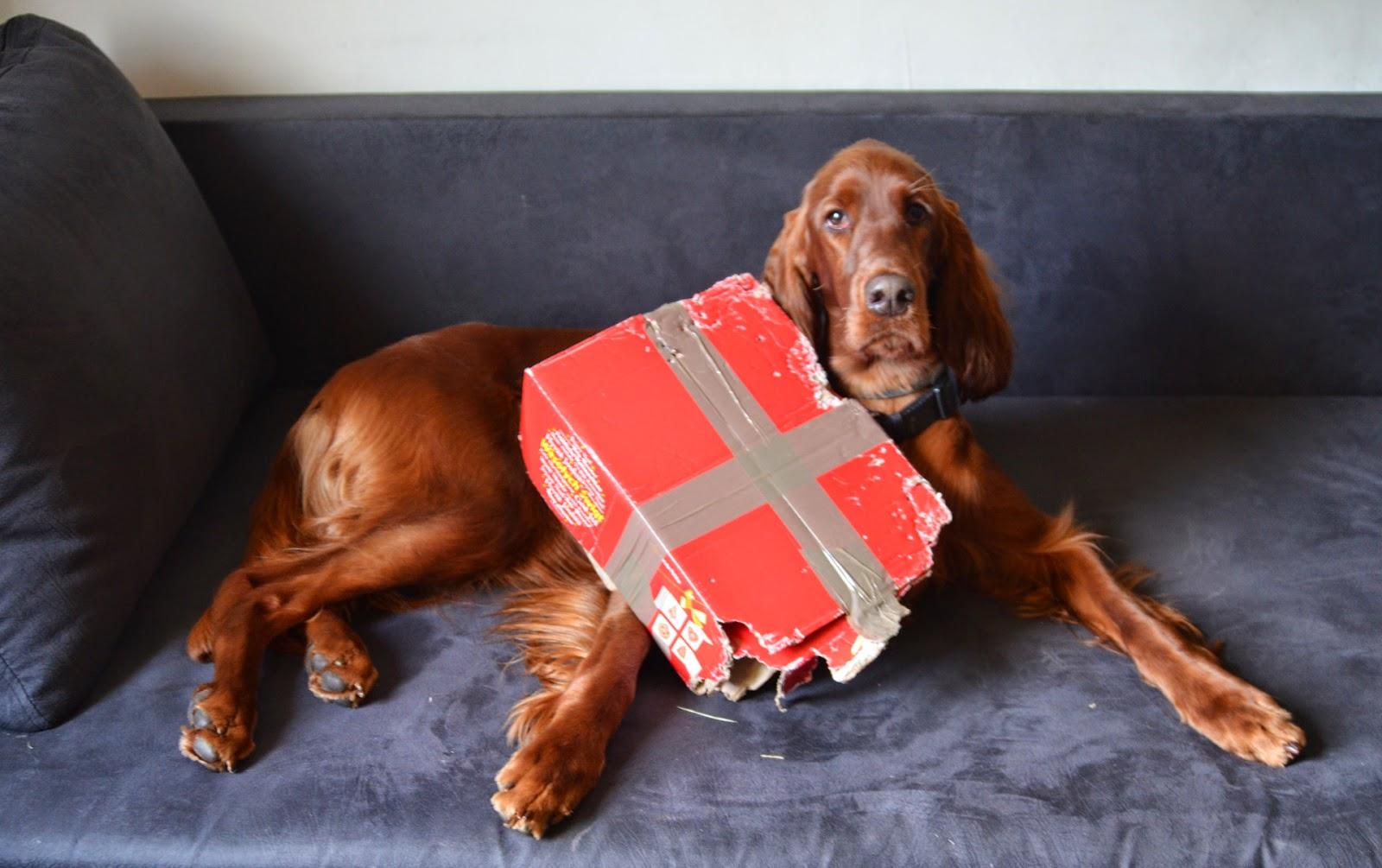 5 nietypowych zabawek mojego psa