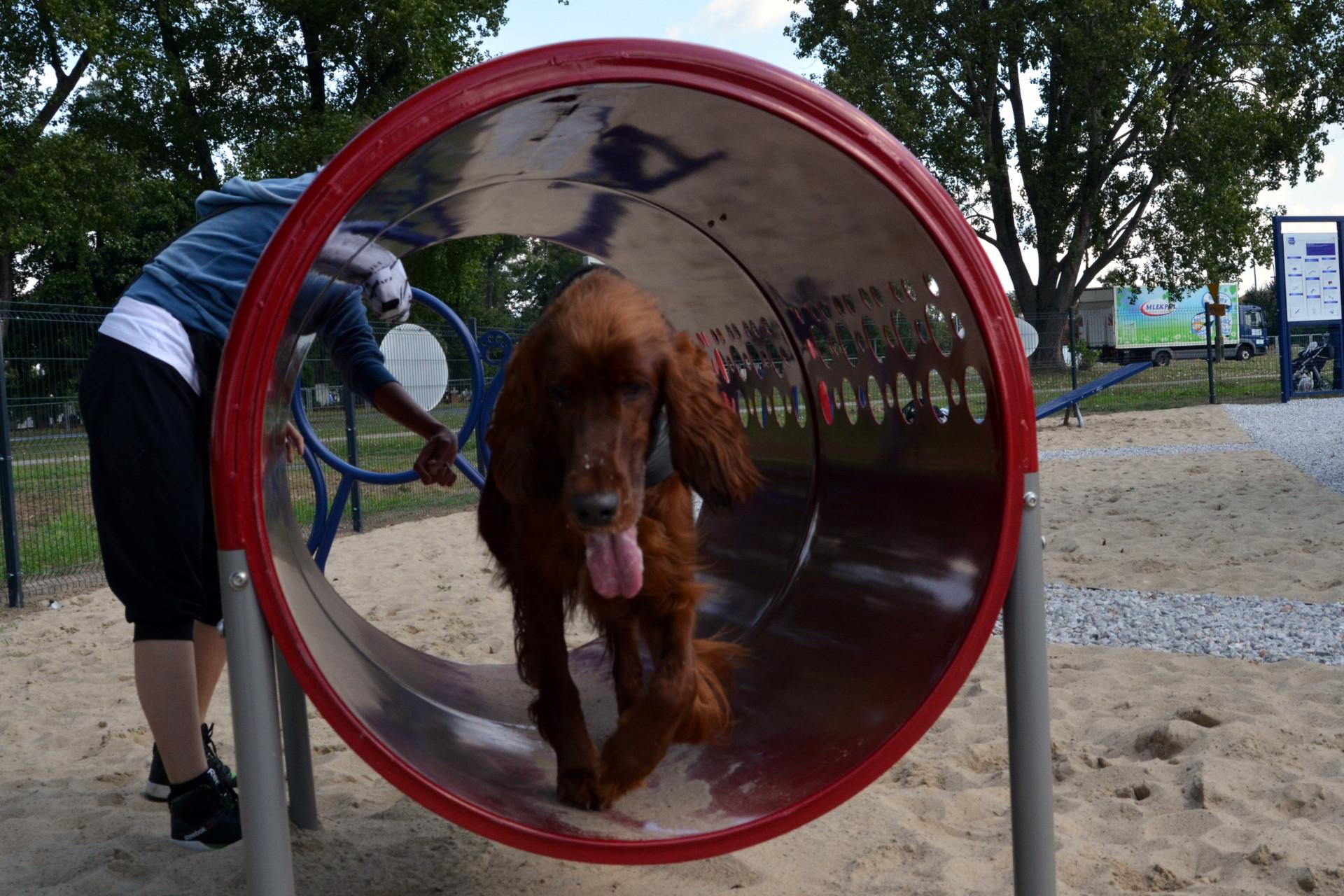 WilanowDogpark2tunel