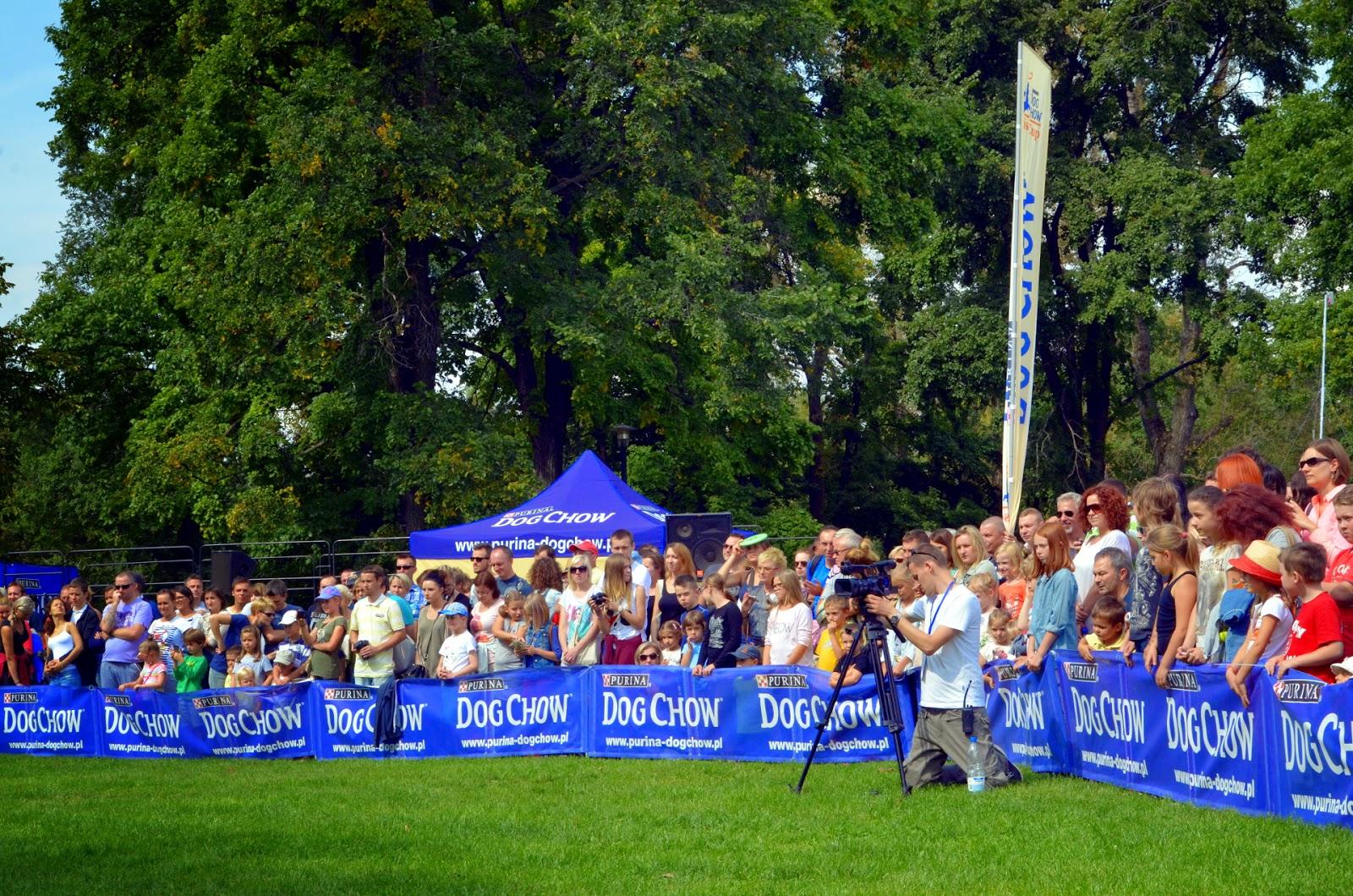 Pies na imprezie masowej: garść rozważań i obserwacji