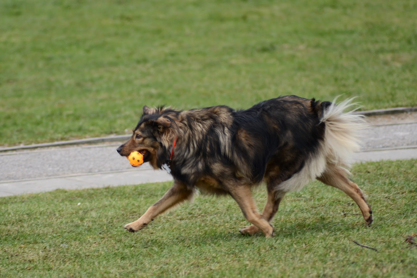 Warszawskie spotkanie psiarzy