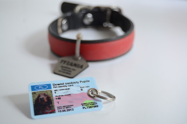 Recenzja: identyfikator SafePet