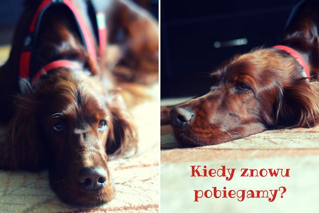 Dog Orient w Puszczy Bolimowskiej
