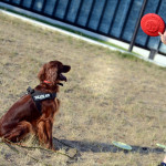 Recenzja: frisbee Dogzilla