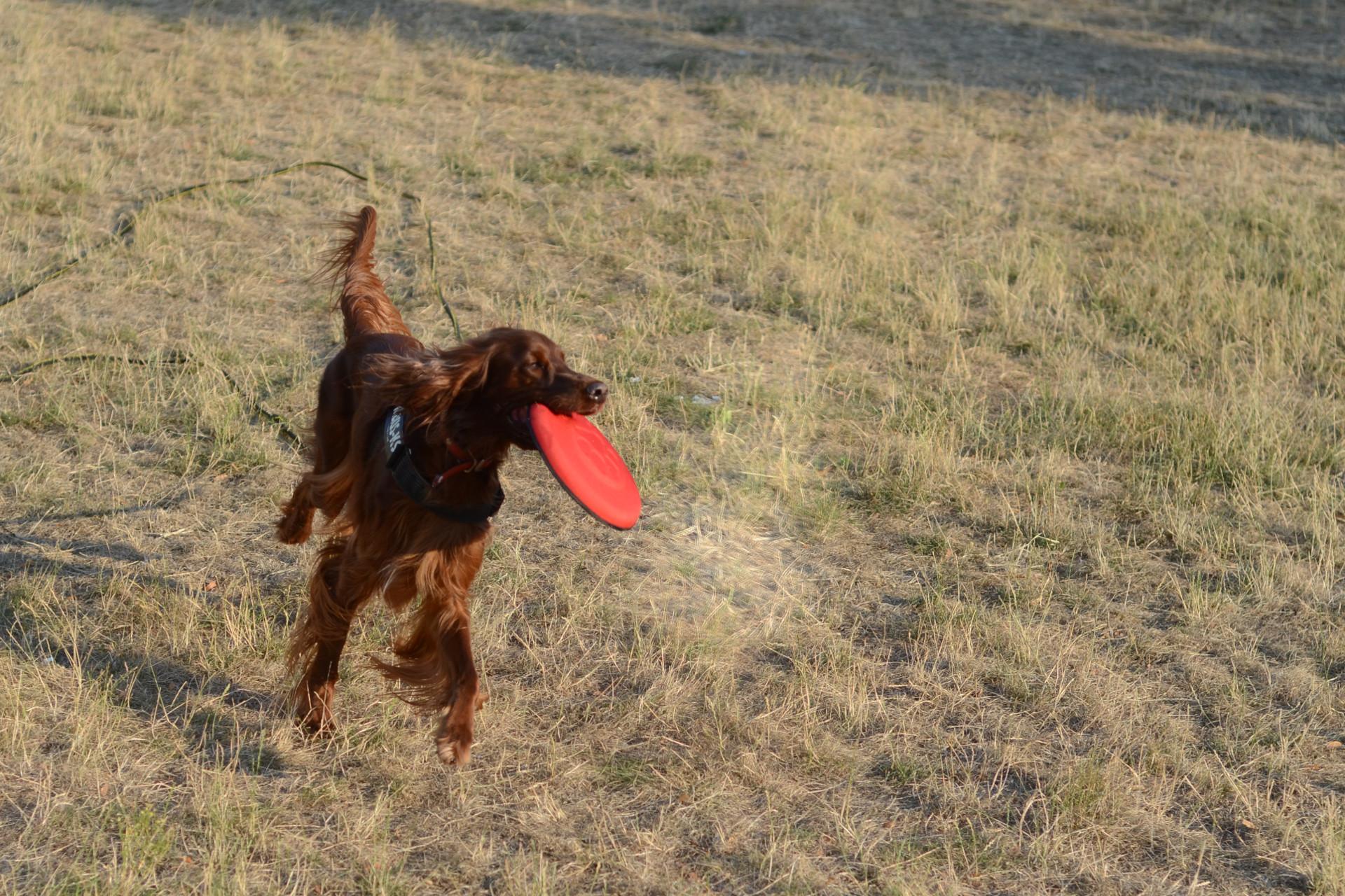 frisbee_dogzilla_4