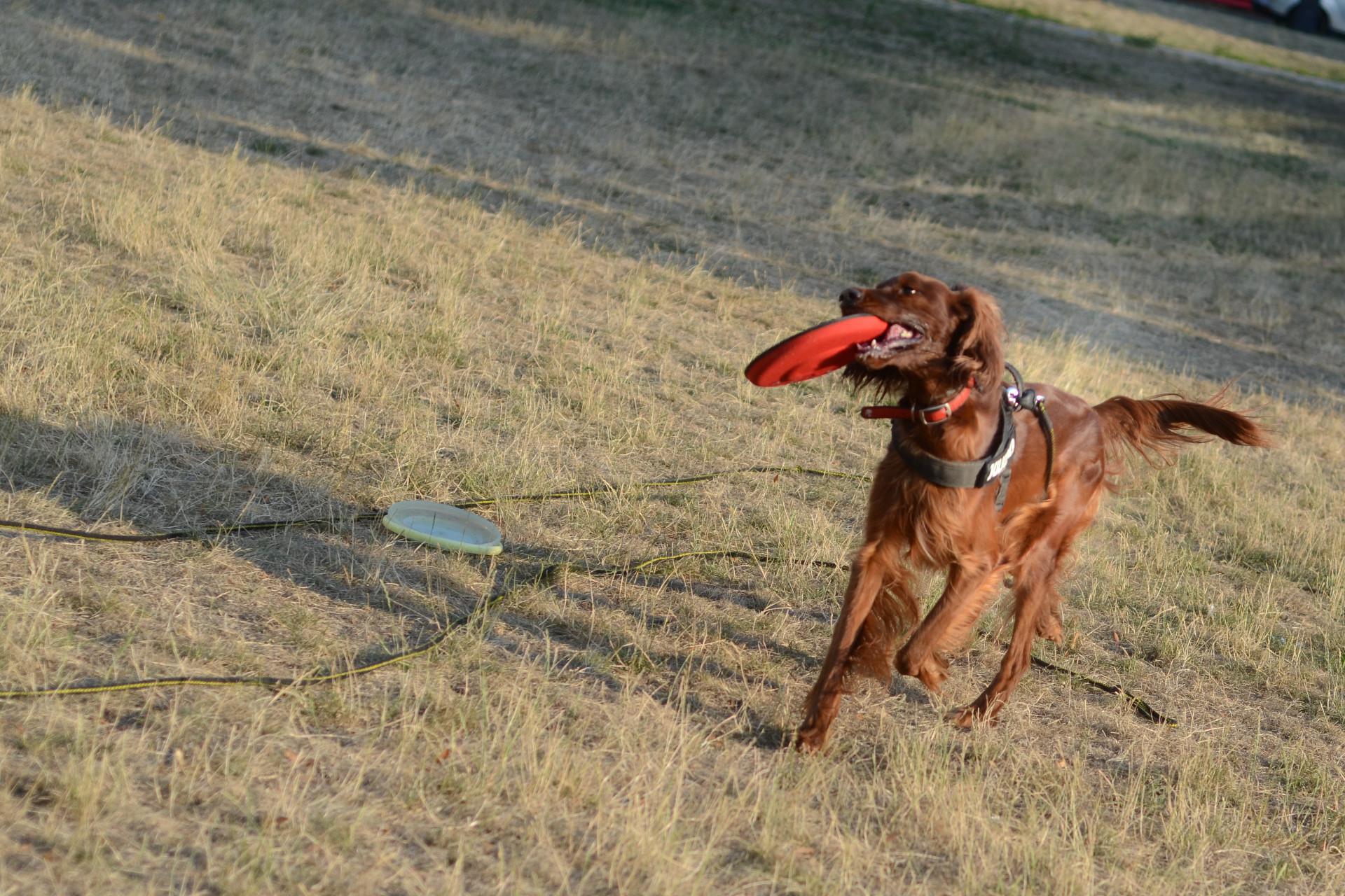 frisbee_dogzilla_5