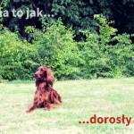 5 powodów, by docenić dorosłego psa