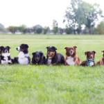 Dog Games Fall: biegnij, Gambit, biegnij!